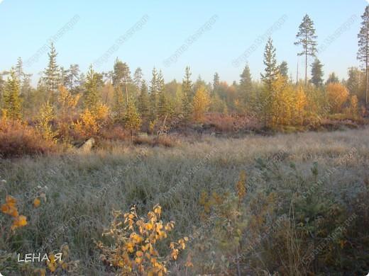 Мой любимый Север, 6 утра...еще изморозь...точнее уже изморозь. фото 1