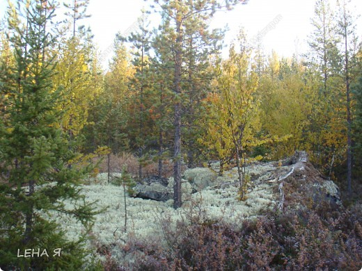 Мой любимый Север, 6 утра...еще изморозь...точнее уже изморозь. фото 3