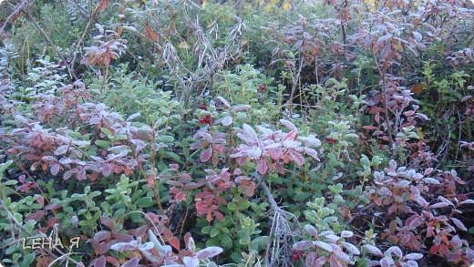 Мой любимый Север, 6 утра...еще изморозь...точнее уже изморозь. фото 4