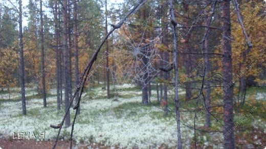 Приглашаю в лес на прогулку... фото 5