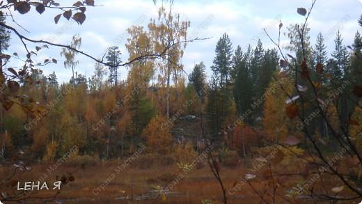 Приглашаю в лес на прогулку... фото 6