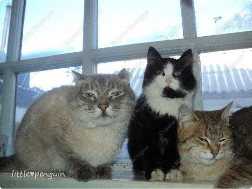 Это мои любимчики,целая кошачья семья. фото 1