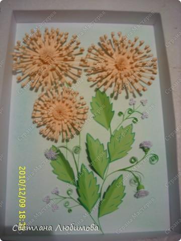 """Вот такие цветочки у меня появились. Как они называются я незнаю. Я зову их """"солнышки"""" фото 1"""