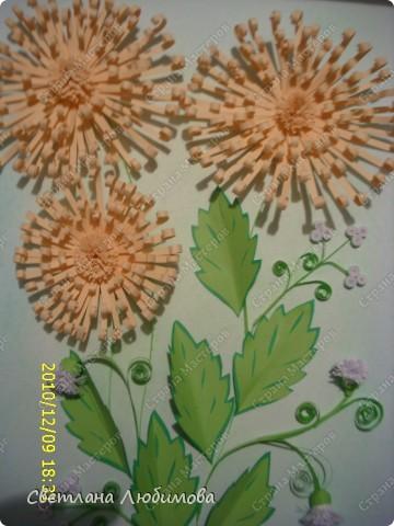 """Вот такие цветочки у меня появились. Как они называются я незнаю. Я зову их """"солнышки"""" фото 2"""