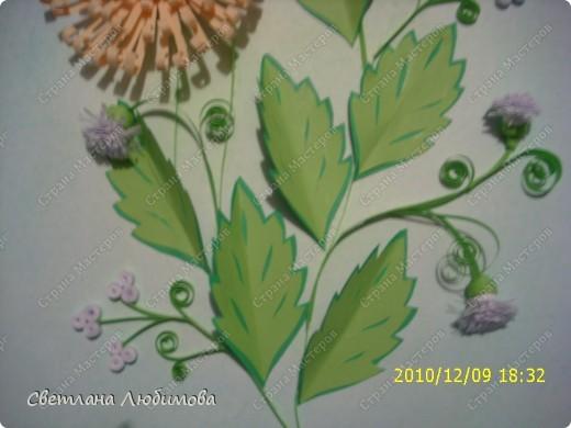"""Вот такие цветочки у меня появились. Как они называются я незнаю. Я зову их """"солнышки"""" фото 4"""