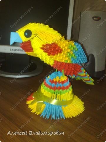 попугаи + из модулей