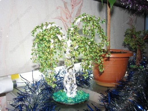 Самое первое деревце. фото 2