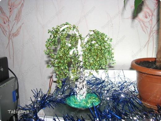 Самое первое деревце. фото 3