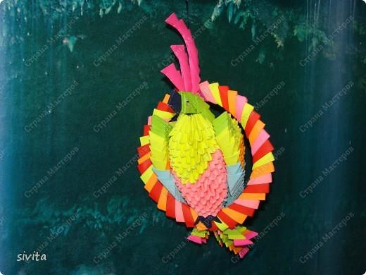 модульное Попугай Бумага