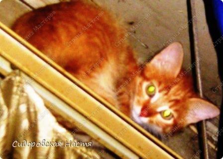 Это наш котенок-Терминатор. Прозаище он получил только после первой фотосессии, когда мы увидели, какие у него светящиеся глаза. фото 1
