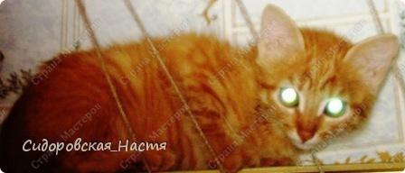 Это наш котенок-Терминатор. Прозаище он получил только после первой фотосессии, когда мы увидели, какие у него светящиеся глаза. фото 2