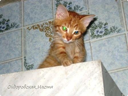 Это наш котенок-Терминатор. Прозаище он получил только после первой фотосессии, когда мы увидели, какие у него светящиеся глаза. фото 3