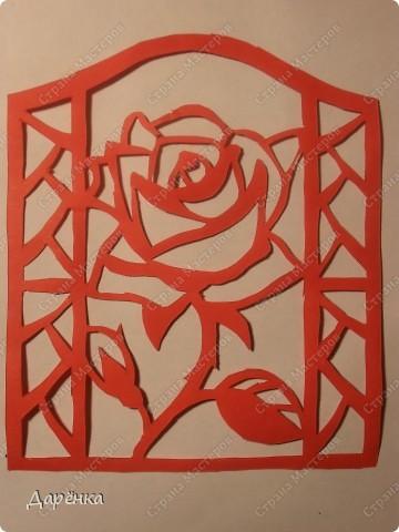 Розу вырезала вчера вечером. фото 1