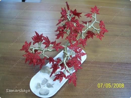Дерево номер РАЗ. вид сбоку. фото 2