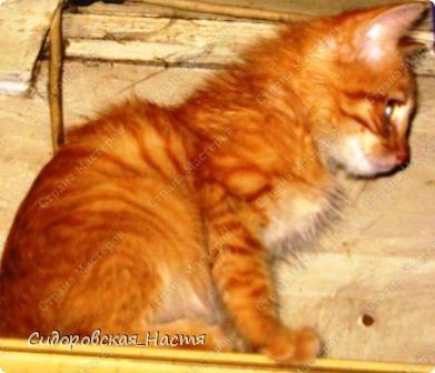 Это наш котенок-Терминатор. Прозаище он получил только после первой фотосессии, когда мы увидели, какие у него светящиеся глаза. фото 4