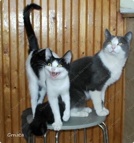 1. Это помощники мамы (свекрови). И наши, пока мы с ними жили))).Черно-белая Мура, хозяин дома Дыма и Тема (темный))). Дыма сам пришел, в открытую дверь, Муру родители котенком на улице подобрали, а Тема - их сын. фото 1