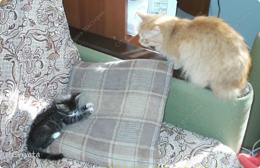 1. Это помощники мамы (свекрови). И наши, пока мы с ними жили))).Черно-белая Мура, хозяин дома Дыма и Тема (темный))). Дыма сам пришел, в открытую дверь, Муру родители котенком на улице подобрали, а Тема - их сын. фото 8