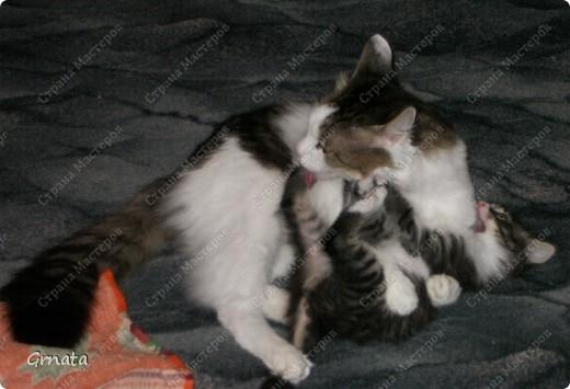 1. Это помощники мамы (свекрови). И наши, пока мы с ними жили))).Черно-белая Мура, хозяин дома Дыма и Тема (темный))). Дыма сам пришел, в открытую дверь, Муру родители котенком на улице подобрали, а Тема - их сын. фото 9