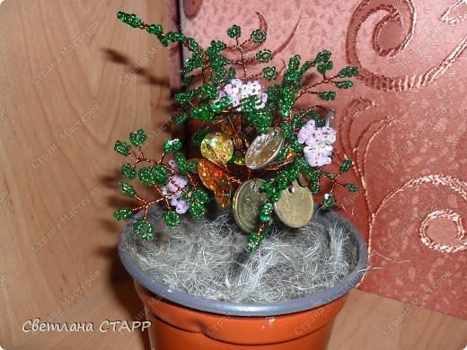моё первое денежное деревце фото 1