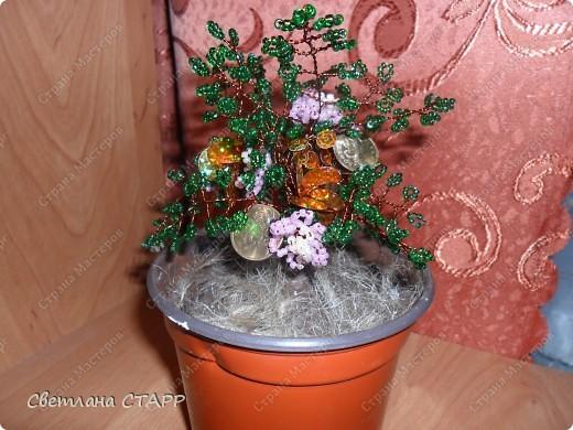 моё первое денежное деревце фото 2