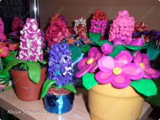 Комнатные цветы из пластилина.  фото 5
