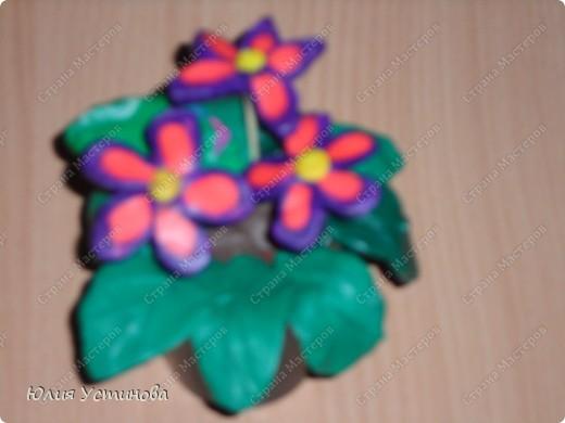 Комнатные цветы из пластилина.  фото 6