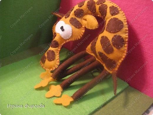 Три жирафа фото 2