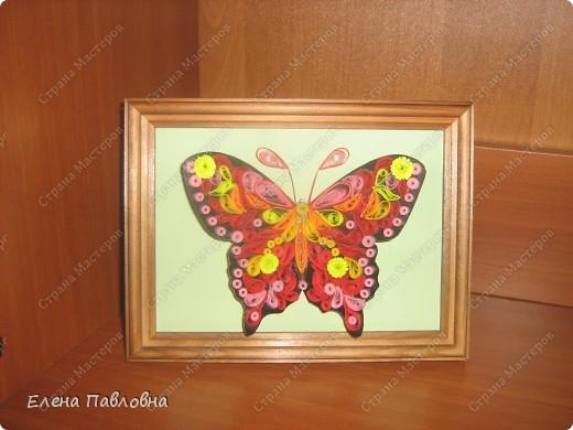 А мы бабочек не сушим-из бумаги их творим... фото 1