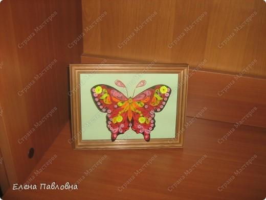 А мы бабочек не сушим-из бумаги их творим... фото 4