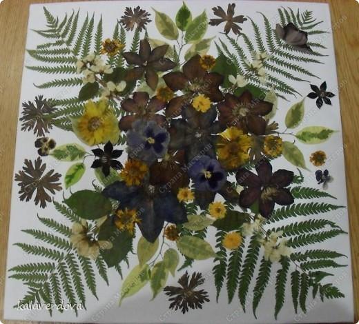 Это сделала из собранных мною и засушенных растений. Подарила подругам. фото 2
