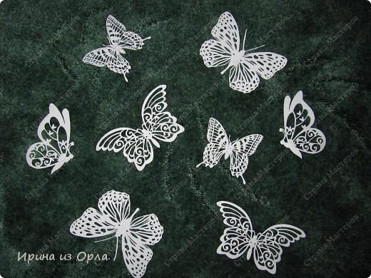 Так сильно хочется весны - надоели морозы! Как здорово, когда пригревает солнышко, слышен звон капели, щебетание птичек. Вот-вот и полетят первые бабочки! фото 1