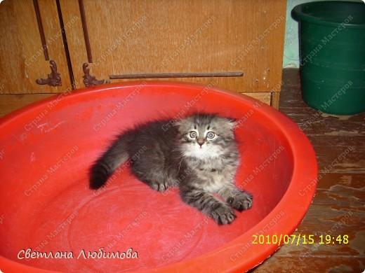 """Это любимец семьи-""""Алекс"""".  Взяли себе котенка летом. Он очень любопытный. Обожает сидеть и спасть в тазах. Стоит любой тазик поставить на пол, он тут как тут- прыг и спать . фото 3"""