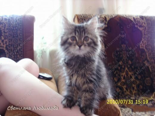 """Это любимец семьи-""""Алекс"""".  Взяли себе котенка летом. Он очень любопытный. Обожает сидеть и спасть в тазах. Стоит любой тазик поставить на пол, он тут как тут- прыг и спать . фото 4"""