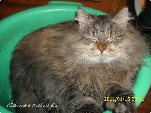 """Это любимец семьи-""""Алекс"""".  Взяли себе котенка летом. Он очень любопытный. Обожает сидеть и спасть в тазах. Стоит любой тазик поставить на пол, он тут как тут- прыг и спать . фото 5"""