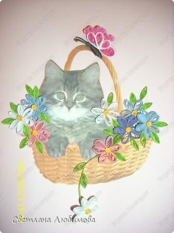 """Это любимец семьи-""""Алекс"""".  Взяли себе котенка летом. Он очень любопытный. Обожает сидеть и спасть в тазах. Стоит любой тазик поставить на пол, он тут как тут- прыг и спать . фото 9"""