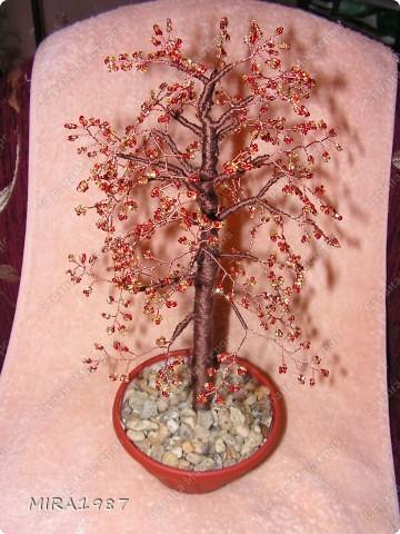 Дерево начальнику фото 1