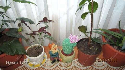кактусенок фото 4