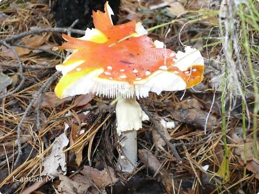 Люблю гулять по лесу, любоваться всем великолепием что создано Природой!!!!! фото 25
