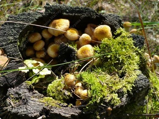 Люблю гулять по лесу, любоваться всем великолепием что создано Природой!!!!! фото 2