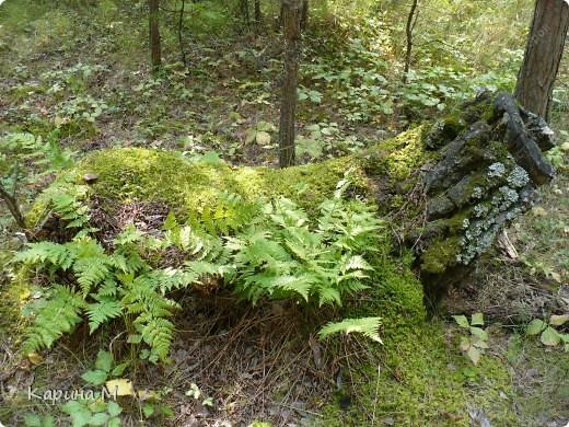 Люблю гулять по лесу, любоваться всем великолепием что создано Природой!!!!! фото 4