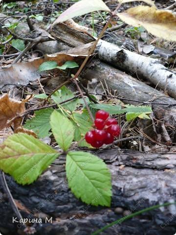 Люблю гулять по лесу, любоваться всем великолепием что создано Природой!!!!! фото 9