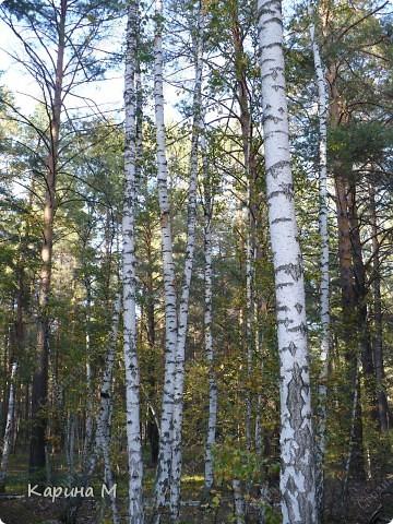 Люблю гулять по лесу, любоваться всем великолепием что создано Природой!!!!! фото 10