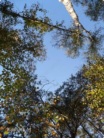 Люблю гулять по лесу, любоваться всем великолепием что создано Природой!!!!! фото 1