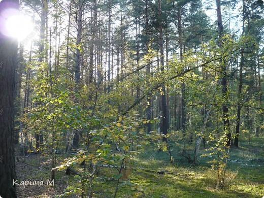 Люблю гулять по лесу, любоваться всем великолепием что создано Природой!!!!! фото 11