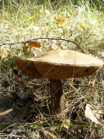 Люблю гулять по лесу, любоваться всем великолепием что создано Природой!!!!! фото 13
