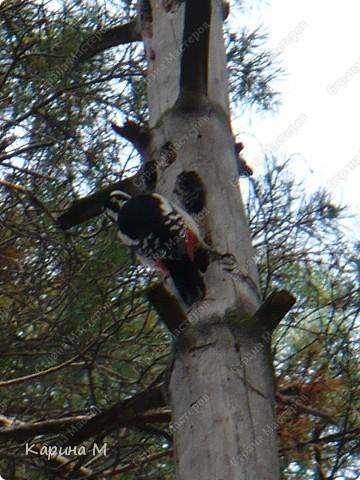 Люблю гулять по лесу, любоваться всем великолепием что создано Природой!!!!! фото 16