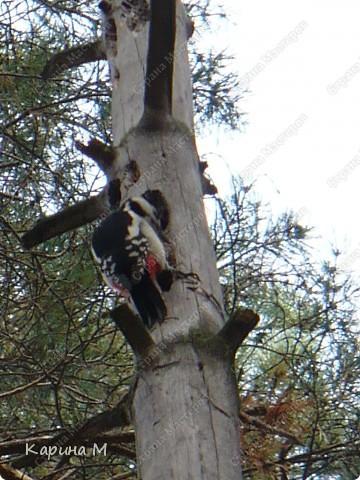 Люблю гулять по лесу, любоваться всем великолепием что создано Природой!!!!! фото 17