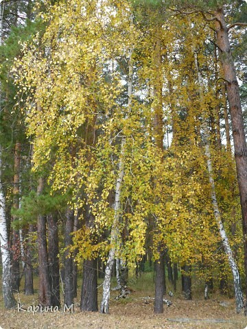 Люблю гулять по лесу, любоваться всем великолепием что создано Природой!!!!! фото 19