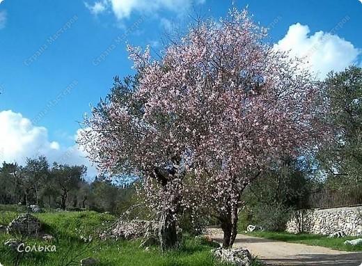 Вот такое миндальное деревце родилось, благодаря ГУЛЬКЕ.. http://stranamasterov.ru/user/46912 фото 13