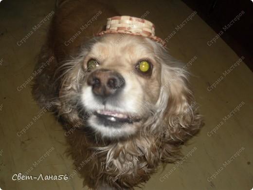 """Этого """"джентльмена """" в соломенной шляпе зовут Кузьма . Как он вам ?! фото 2"""